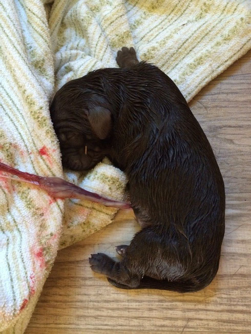 Browni kurz nach der Geburt