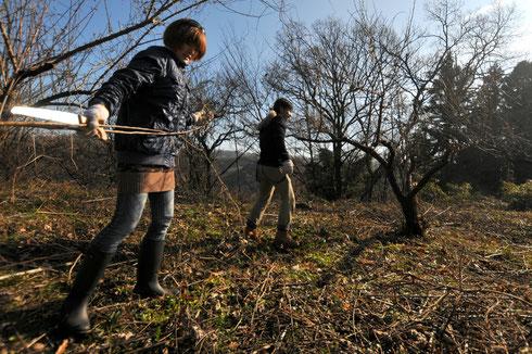 真冬の果樹の剪定。お正月を過ぎれば、既に春の息遣いが聴こえます。