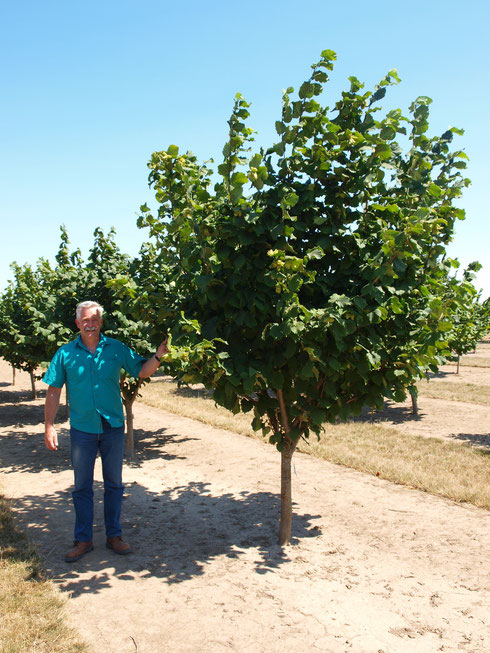 Five year old Jefferson tree with breeder Dr. Shawn Mehlenbacher
