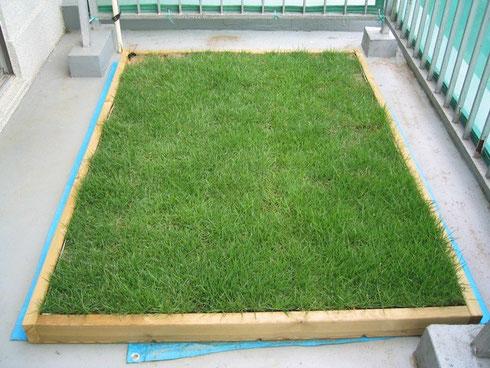 コンクリートのベランダを高麗芝で緑化