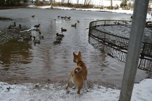 Imani bei de Entenfütterung