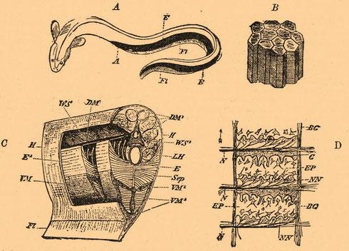 8. Вихревая структура материи. Конус основание которого сота в статике, в динамике суть эфирон (спиралеконусоид) Image