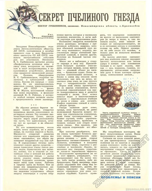 Секрет пчелиного гнезда статья
