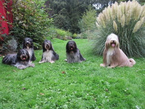 Das sieht doch schon ganz ordentlich aus......Fünf der Muppmänner zusammen auf einem Bild!!!Die beiden Oldies aber hatten keine Lust!