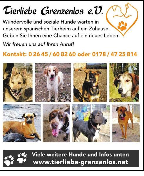 Lokal Anzeiger Rhein-Wied-Kurier vom 22.10.2014