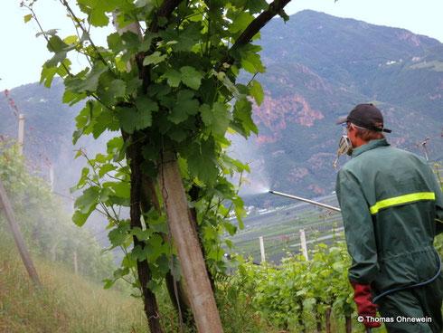 Pflanzenschutz im Weinberg (Missianer Leiten).