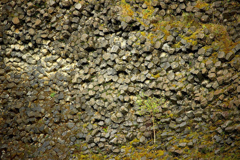 Basaltsäulen des Steinbruches; Bild: Bernd Becker