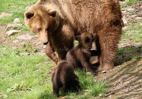 Venez découvrir le parc animalier de Borce