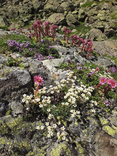 Flore de nos montagnes