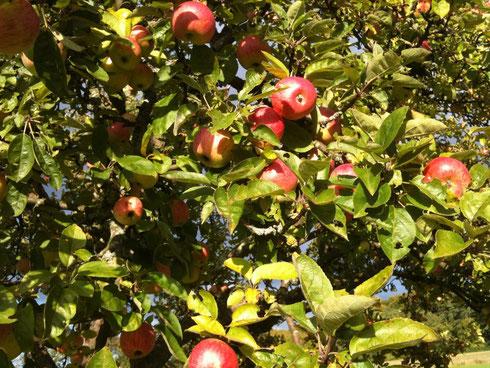 Die Arbeit trägt Früchte