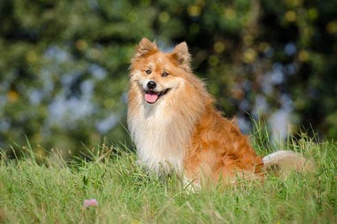 Inka die Chefin des Hunde-Rudels