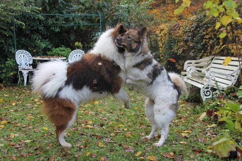 die zwei Tanzbären