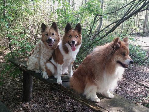 Dini, Binka und Inka nach Waldspaziergang