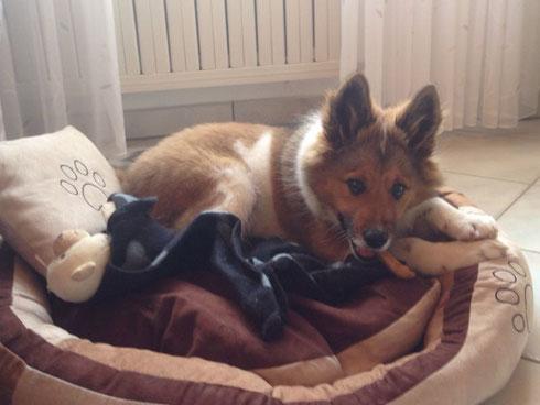 Binkas, Bett, Decke und Knochen!