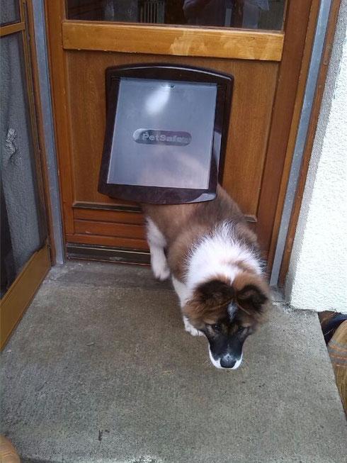Balino hat nun eine Hundeklappe!