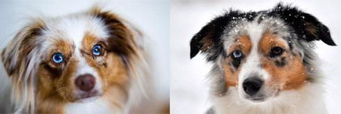 Foxi im Juni, Blue im Dezember 2012