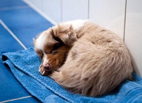 Foxi im Badezimmer am 24.02.2011