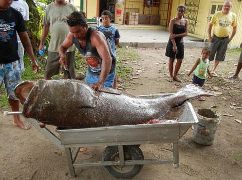 Seychellen angeln Grundangeln riesiger Grouper