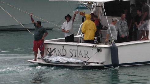 Seychelles fishing winning Marlin Jan. 2014