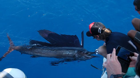 seychelles-fishing reports & information - Seychelles