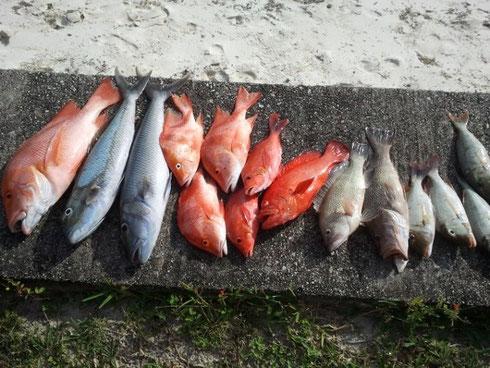Seychellen angeln Grundangeln Fang Jan. 2014