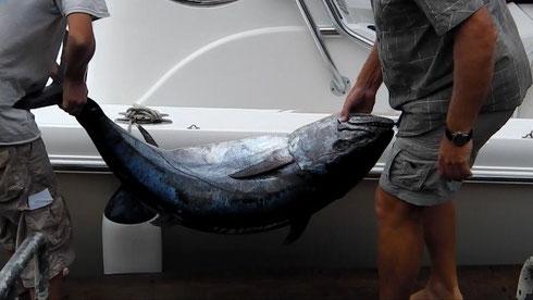 Seychellen angeln Hundezahntun Dez. 2014