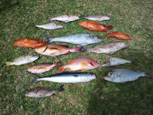 Seychellen angeln Grundangeln Fang 1