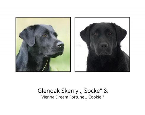 Glenoak Skerry & Vienna Dream Fortune Cookie