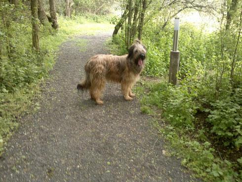 Beim Spaziergang in der Hundeschule