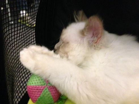 Der kleine El Diablo hat die große Reise gut überstanden. Die meiste Zeit hat er seelenruhig geschlafen.