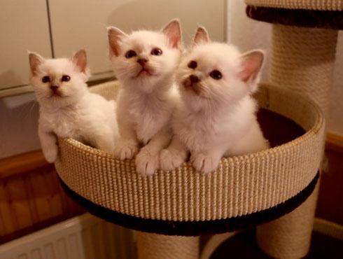 Ela, Edha und Eshana