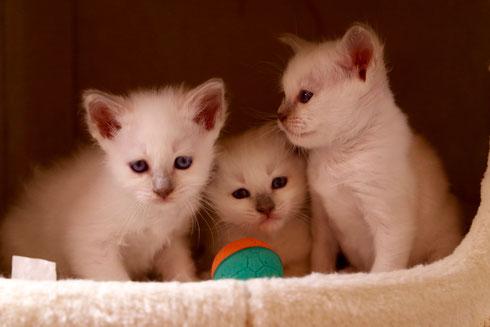 Edha, Eshana und Ela