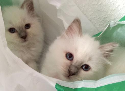 Charu und Clea