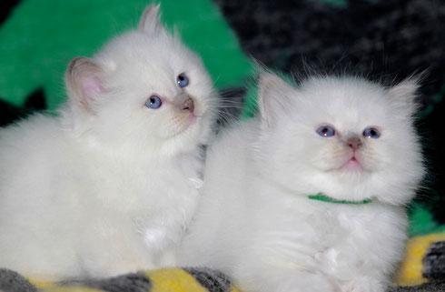 links Clea und rechts Charu