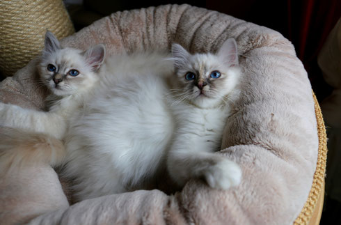 Freena und Faria