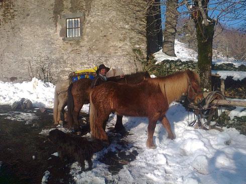 Felix traverse l'Europe et se pose à Sarbonnel avec ses poneys..!