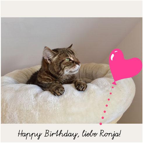 Bild: Katze Ronja im Liegebettchen