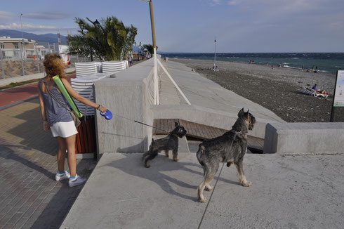 Harley & Alf - Sochi (September 2014)