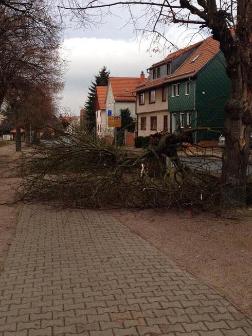 Am 10.12.2014 brach ein Baum beim Sturm um
