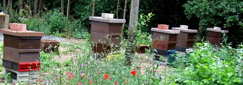 Bienenvölker im Bienen-Garten