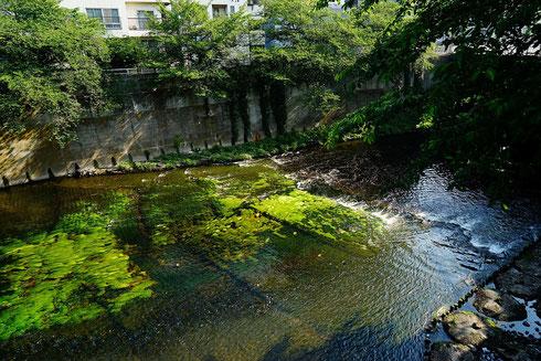 こうして緑のある神田川を眺めるとホッとするんだぁ
