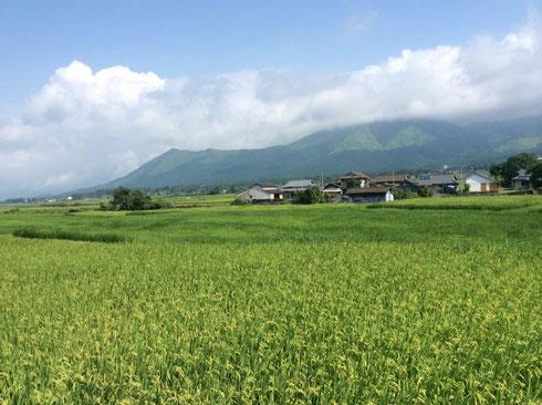 素敵な田園風景だよね♪