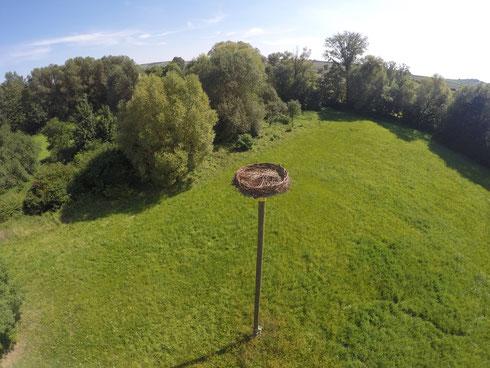 Storchennest des NABU Stadecken-Elsheim