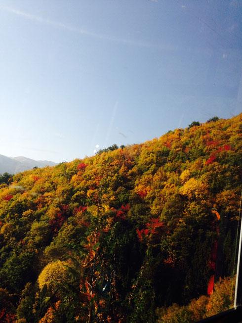 ヘブンスそのはら標高1400m付近の紅葉