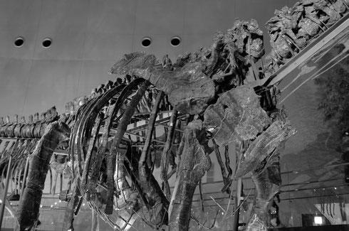 ↑これ、モノホンの化石だそうです