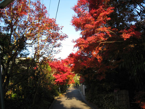 紅葉、色づく