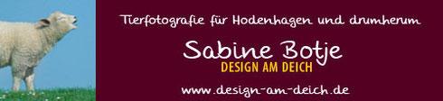 Tierfotografie Hodenhagen, Sabine Botje - DESIGN AM DEICH