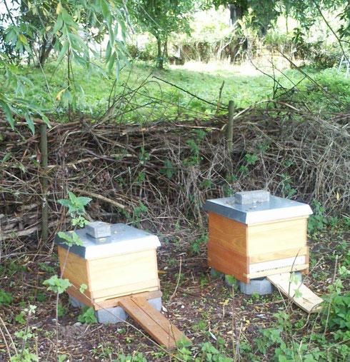 die Bienenstöcke im Frühjahr