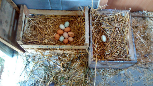 Alle immer in ein Nest rein!