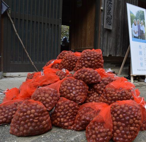 収穫量は、なんと!208キロ!! 最高記録は1人で9.8キロも拾われた方